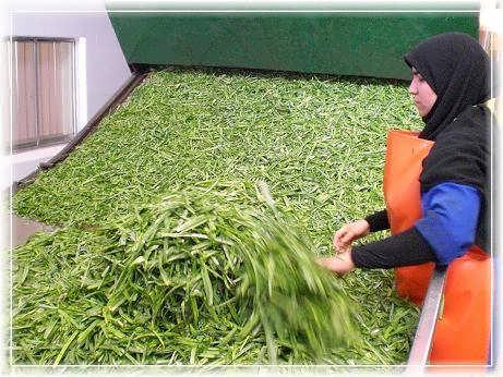 بستهبندي سبزيجات خشك