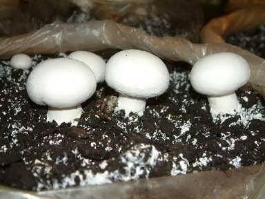 سود پرورش قارچ