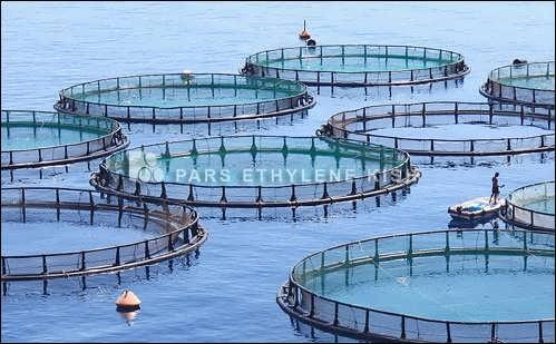 طرح توجیهی پرورش ماهی در قفس