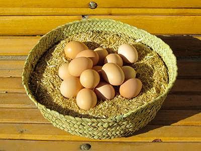 طرح توجیهی پرورش مرغ تخم گذار بومی