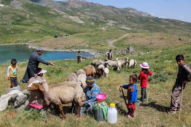 طرح توجیهی پرورش گوسفند عشایری