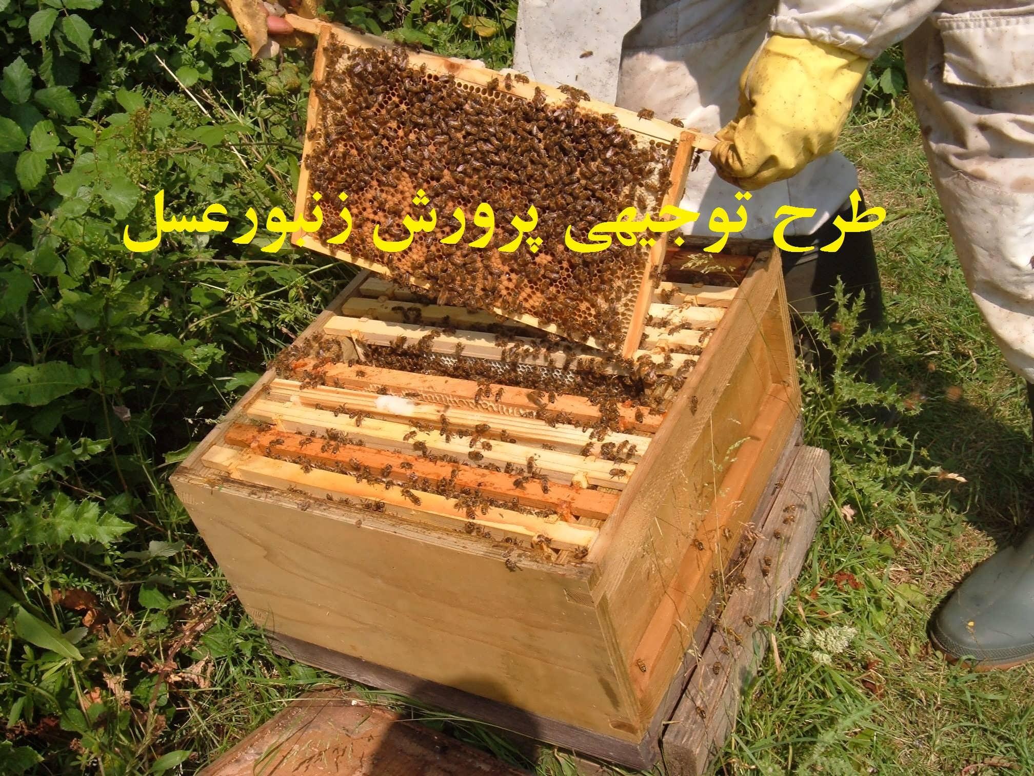 طرح توجیهی زنبورداری برای سایت کارا