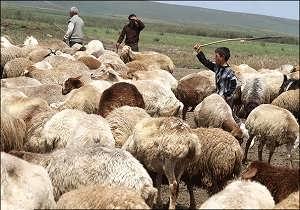 گوسفند عشایری