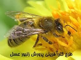 نمونه طرح توجیهی زنبورداری