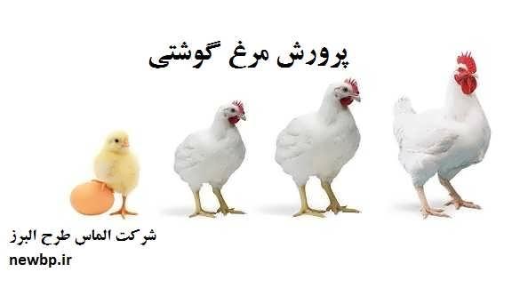هزینه پرورش مرغ گوشتی