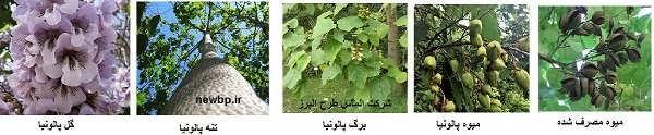 طرح پرورش پالونیا (پائولونیا) سریع الرشدترین درخت دنیا  با پساب فاضلاب تهران- آیا پالونیا سود آور است؟