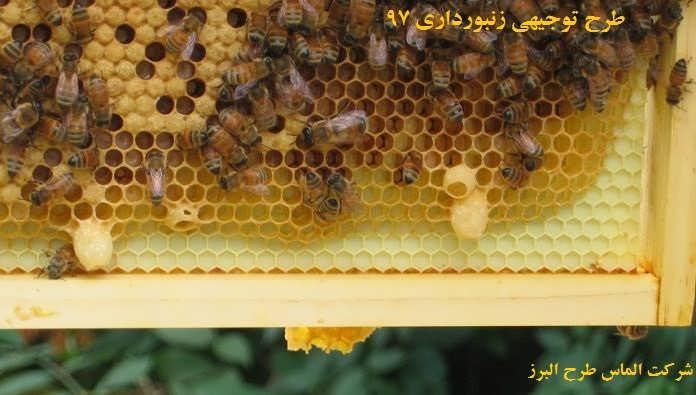 طرح توجیهی زنبورداری 97