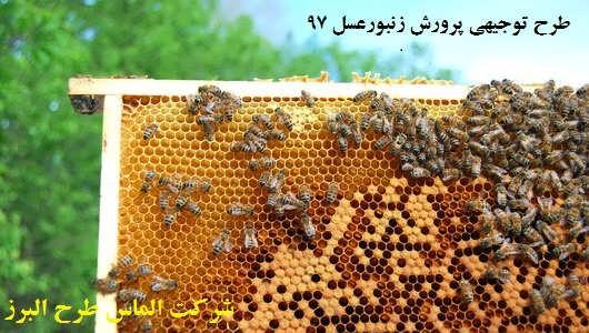 درآمد زنبورداری