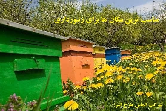 مکان مناسب برای زنبورداری
