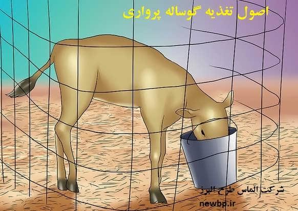 جیره گوساله پرواری