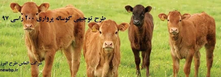 طرح توجیهی گوساله پرواری