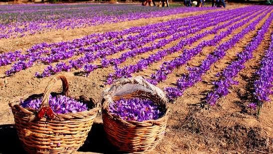 زود بازده ترین محصول کشاورزی