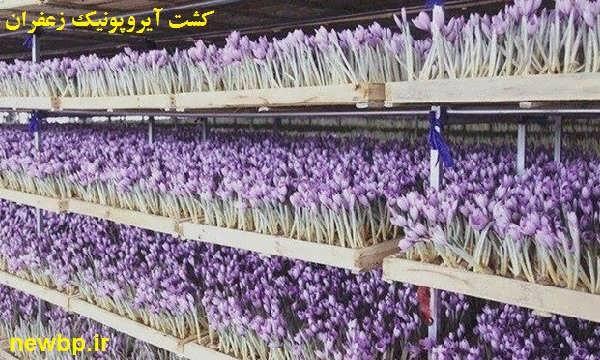کاشت ایروپونیک زعفران