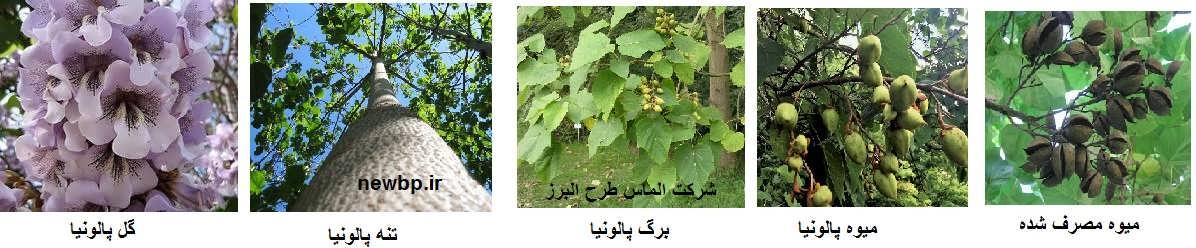 طرح توجیهی کاشت درخت پالونیا
