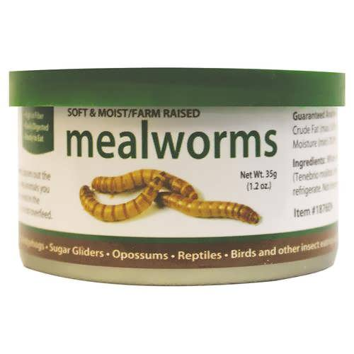 mealworm کرم میل ورم