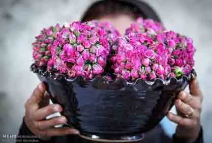 کشت دیم گل محمدی