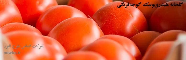 طرح توجیهی گلخانه هیدروپونیک گوجه فرنگی