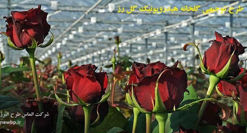 طرح توجیهی گلخانه هیدروپونیک گل رز