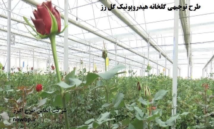 طرح توجیهی گلخانه هیدروپونیک گل رز  هلندی