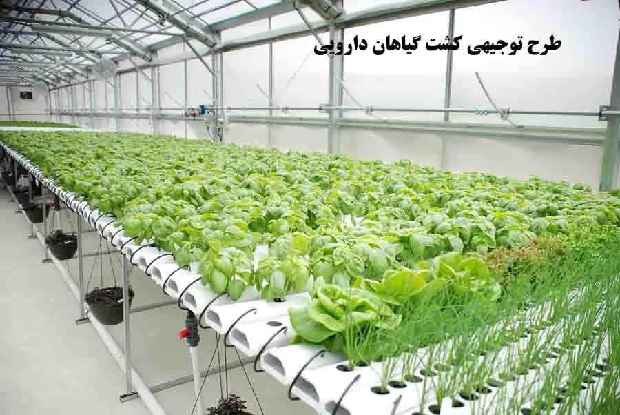 طرح توجیحی گیاهان دارویی pdf
