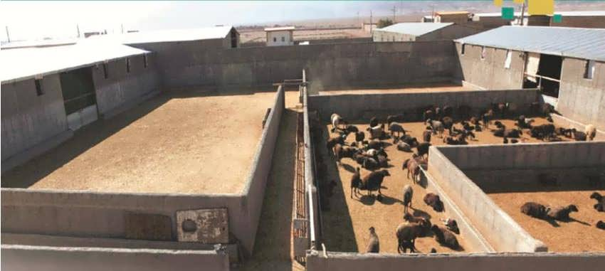 جایگاهنگهداری بره و گوسفند
