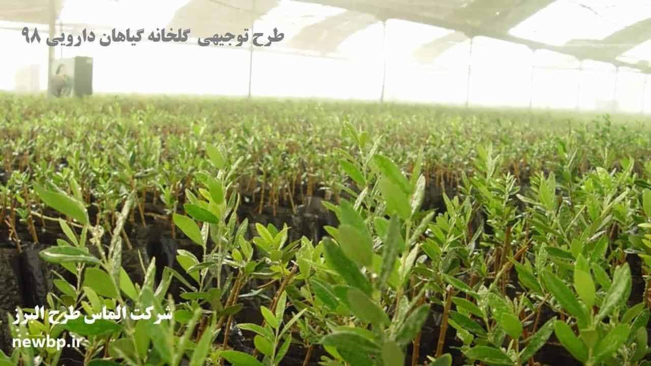 طرح توجیهی  گلخانه گیاهان دارویی