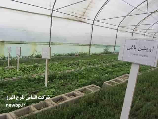 طرح توجیهی کشت گیاهان دارویی در گلخانه