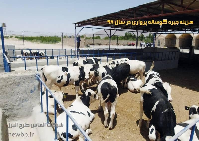 خوراک گوساله پرواری سیمینتال
