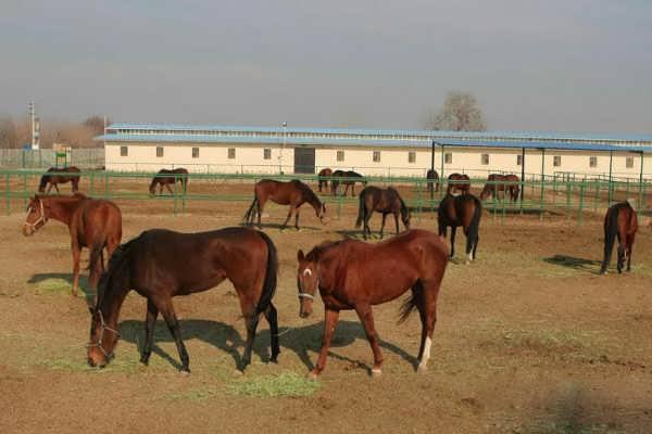 انواع روشهای پرورش و نگهداری اسب