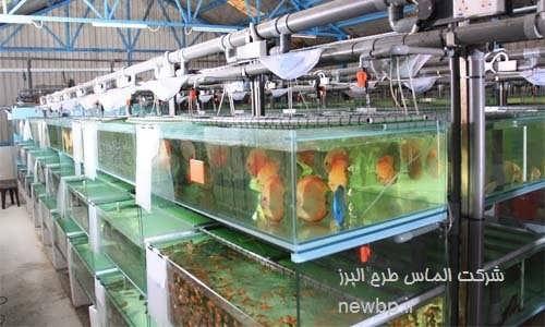 پرورش ماهی زینتی در منزل