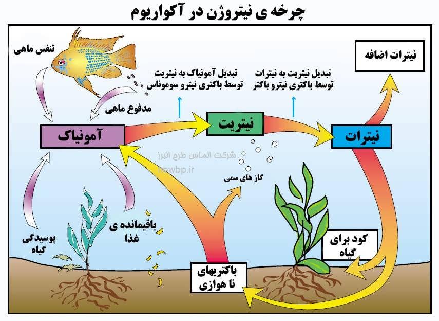 مدیریت و نگهداری ماهی زینتی