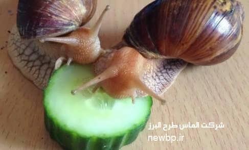 تغذیه حلزون
