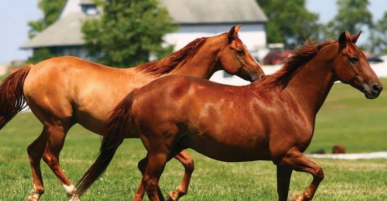طرح توجیهی پرورش اسب
