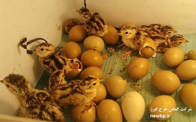 خرید تخم نطفهدار