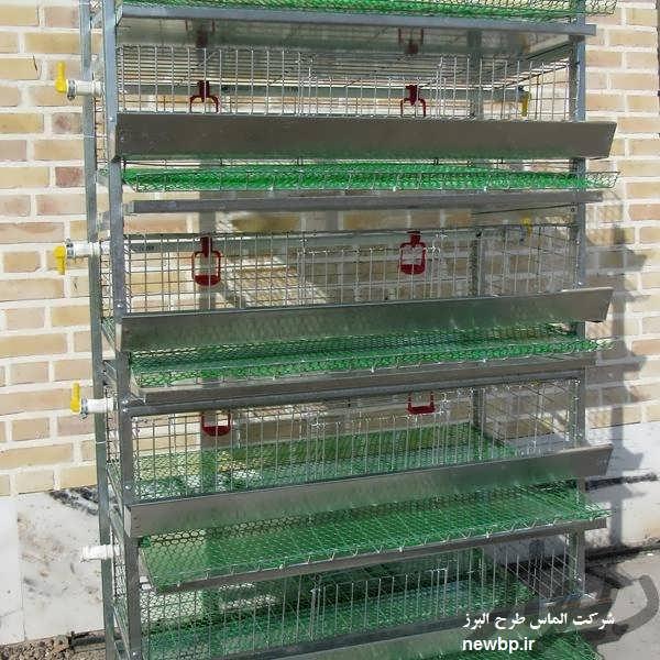 پرورش قرقاول در قفس