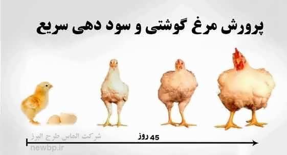 طرح توجیهی مرغداری گوشتی در سال 98