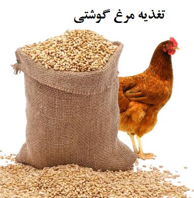 تغذیه مرغ گوشتی