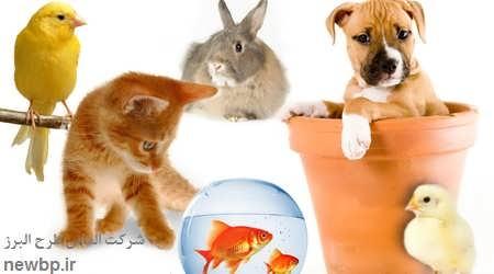 پرورش حیوانات خانگی