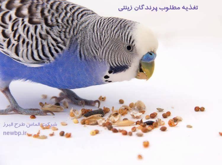 تغذیه مطلوب پرندگان زینتی