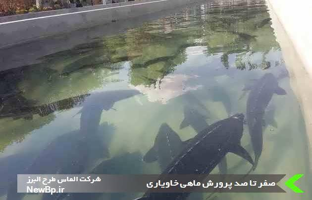 پرورش ماهی خاویاری