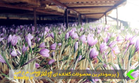 زعفران از پرسودترین محصول گلخانه ای است