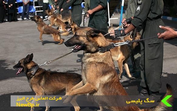 سگ پلیسی