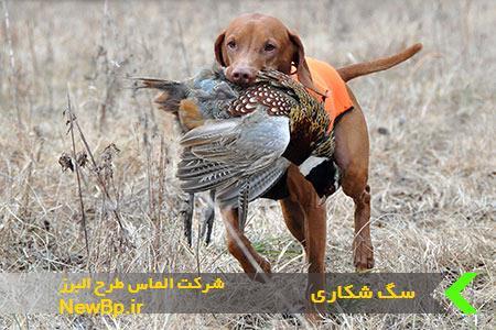 سگ شکاری