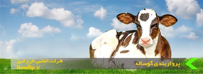 طول دوره پرواربندی گوساله