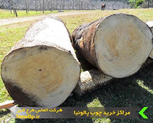 مراکز خرید چوب پالونیا
