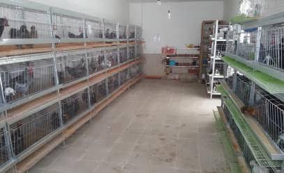 سالن پرورش پرندگان زینتی