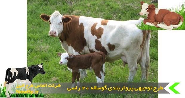 طرح توجیهی پرواربندی گوساله 20 راسی