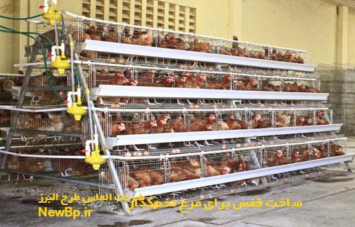 ساخت قفس برای مرغ تخمگذار