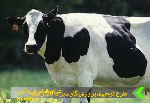 طرح توجیهی پرورش گاو شیری 20 راسی
