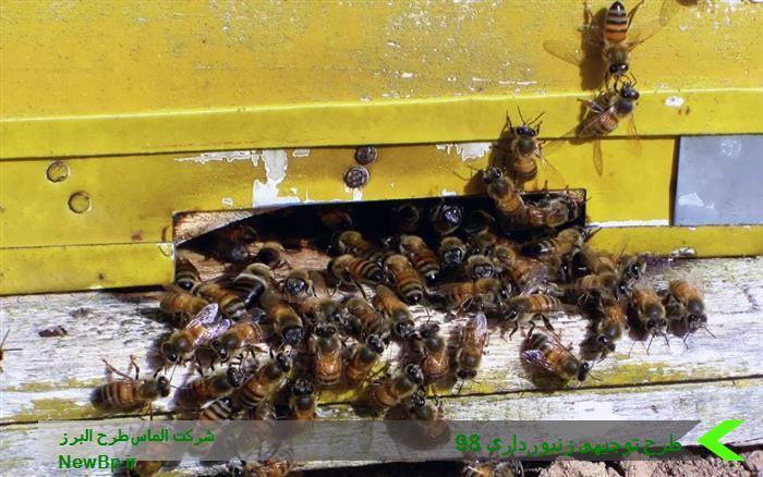 طرح توجیهی زنبورداری 98
